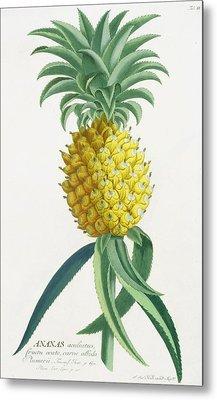 Pineapple Engraved By Johann Jakob Haid Metal Print by German School