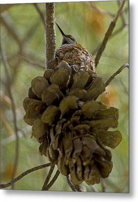 Pinecone Nest Metal Print
