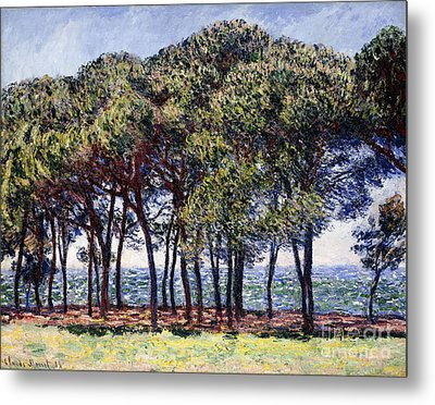 Pines Metal Print by Claude Monet