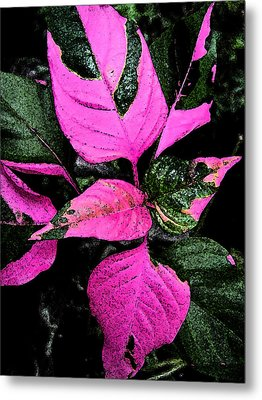 Metal Print featuring the photograph Pink And Green by Aimee L Maher Photography and Art Visit ALMGallerydotcom