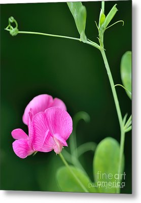 Pink And Green Metal Print by David Perry Lawrence