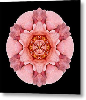 Metal Print featuring the photograph Pink And Orange Rose Iv Flower Mandala by David J Bookbinder