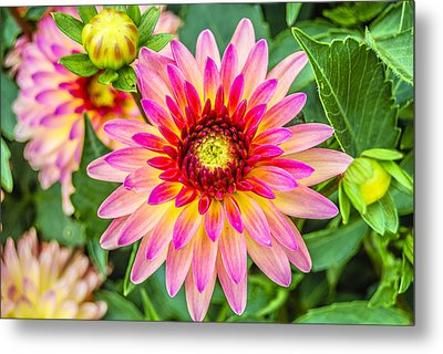 Pink And Purple Blooms Metal Print