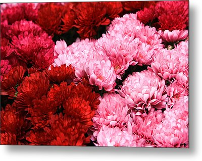 Pink And Red Metal Print by Menachem Ganon