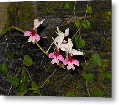 Pink And White Orchids Metal Print