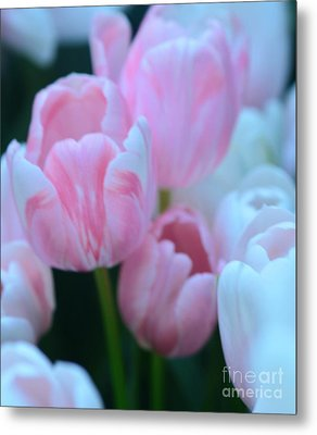 Pink And White Tulips Metal Print by Kathleen Struckle