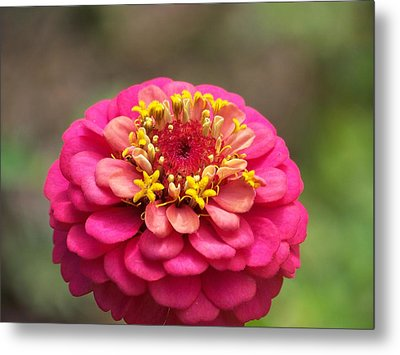 Pink Floral  Metal Print by Eunice Miller