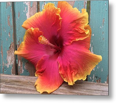 Tropical Pink And Yellow Hibiscus  Metal Print