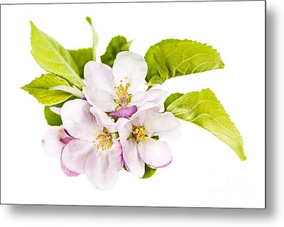 Pink Apple Blossoms Metal Print by Elena Elisseeva