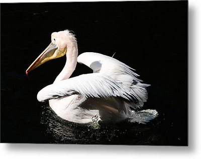 Pink Backed Pelican Metal Print by Bonnie Fink