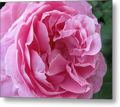 Metal Print featuring the photograph Pink Beauty by Pema Hou