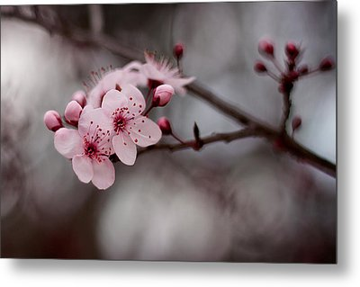 Pink Blossoms Metal Print by Michelle Wrighton