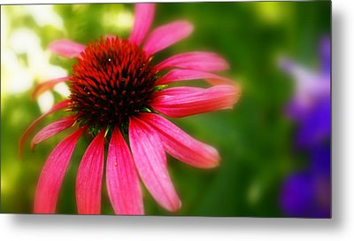 Pink Burst Of Color Metal Print by Alexandra  Rampolla