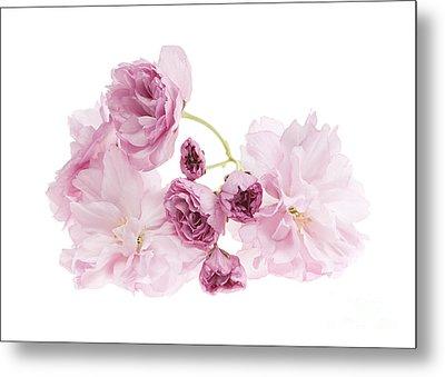 Pink Cherry Blossoms Metal Print by Elena Elisseeva
