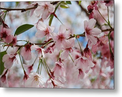 Metal Print featuring the photograph Pink Cherry Blossoms by Jocelyn Friis