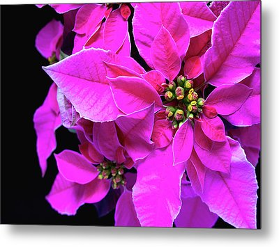 Metal Print featuring the photograph Pink Christmas by Charles Lupica