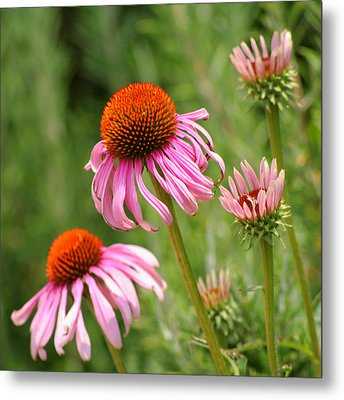 Pink Cone Flower Metal Print by Art Block Collections