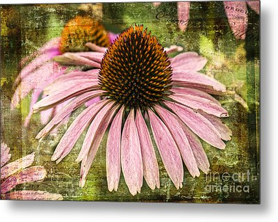 Metal Print featuring the photograph Pink Coneflower by Vicki DeVico