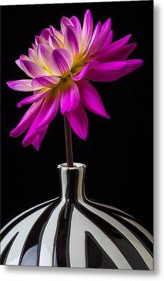 Pink Dahlia In Striped Vase Metal Print by Garry Gay