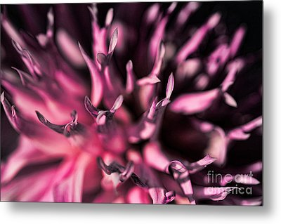 Metal Print featuring the photograph Pink Dahlia by Rebeka Dove
