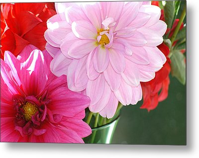 Pink Dahlias In The Morning Metal Print
