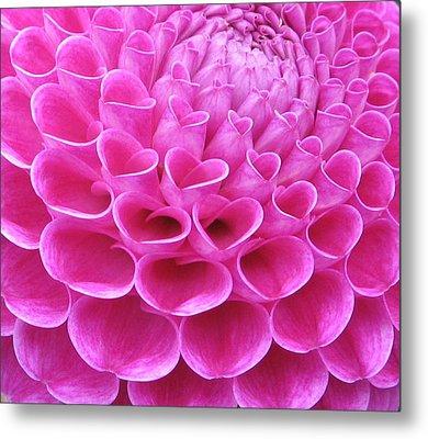 Pink Delight Metal Print