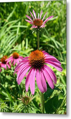 Metal Print featuring the photograph Pink Echinacea by Ellen Tully