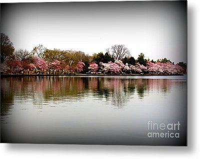 Pink Echoes Metal Print by Patti Whitten