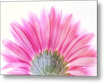 Pink Fan Metal Print by Andrea Kollo