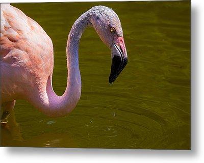 Pink Flamingo Metal Print by Garry Gay