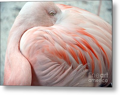 Metal Print featuring the photograph Pink Flamingo II by Robert Meanor