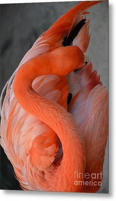 Metal Print featuring the photograph Pink Flamingo by Robert Meanor
