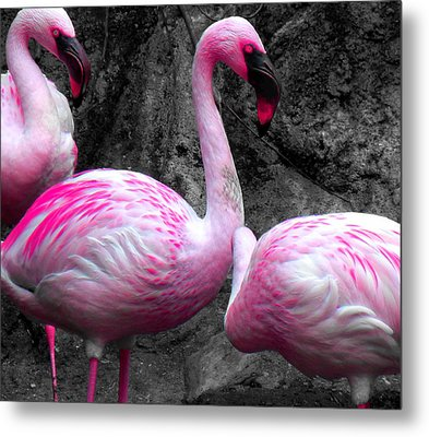 Metal Print featuring the photograph Pink Flamingos by J Anthony