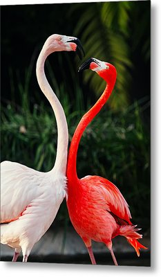 Pink Flamingos - Who's The Boss? Metal Print