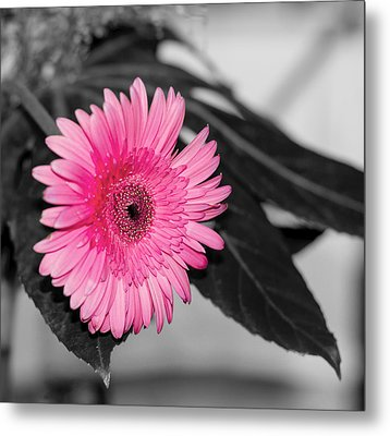 Pink Flower Metal Print by Amr Miqdadi