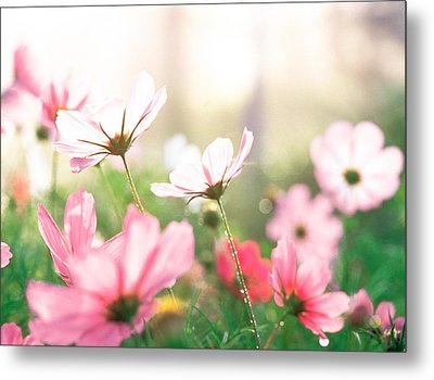 Pink Flowers In Meadow Metal Print by Panoramic Images
