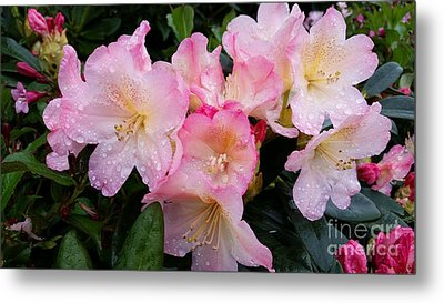 Metal Print featuring the photograph Pink Flowers by Rose Wang
