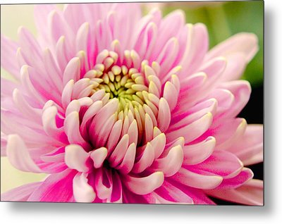 Pink Passion Metal Print by Dennis Baswell
