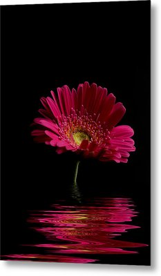 Pink Gerbera Flood 1 Metal Print