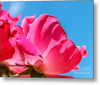 Pink Glory Metal Print by Brandon Hussey