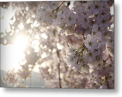 Pink Gold Metal Print by Michael Donahue