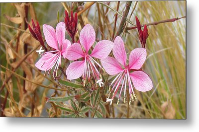 Metal Print featuring the photograph Pink Guara by Bonnie Muir