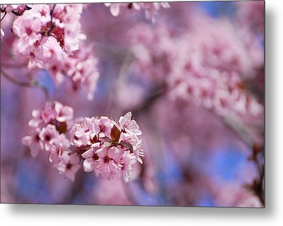 Pink Metal Print by Guido Montanes Castillo