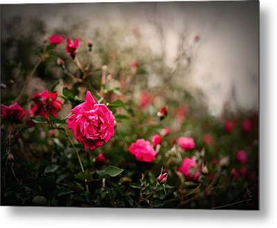 Pink Heaven Metal Print by Linda Unger