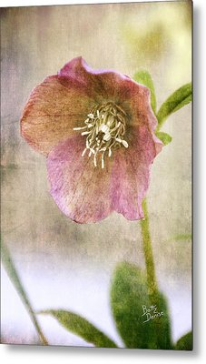Metal Print featuring the photograph Pink Hellebore by Betty Denise