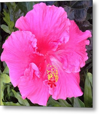 Metal Print featuring the photograph Pink Hibiscus by Alohi Fujimoto