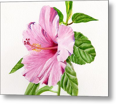 Pink Hibiscus With White Background Metal Print by Sharon Freeman