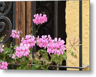 Metal Print featuring the photograph Pink In My Window by Lew Davis