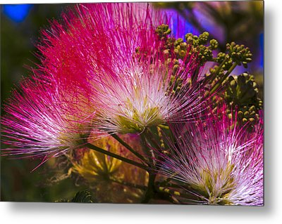 Pink  Metal Print by Ivete Basso Photography