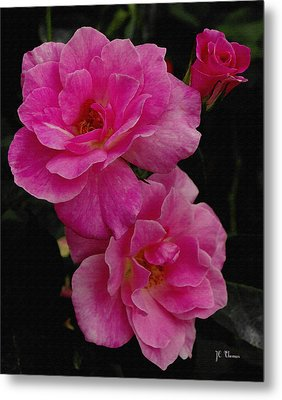 Metal Print featuring the photograph Pink Knock Outs by James C Thomas